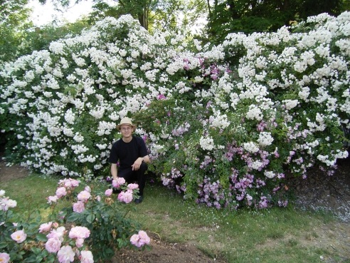 Me and Dentelle de Malines at Sangerhausen Rosarium - this is a Rosa filipes hybrid bred by Louis Lens